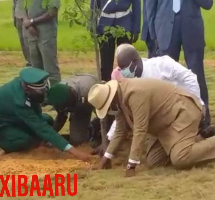 Journée de l'arbre 2020 : La belle leçon d'humilité du Président au ministre de l'environnement
